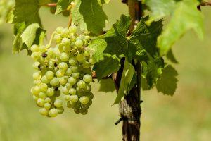 grapes-1611089_1920
